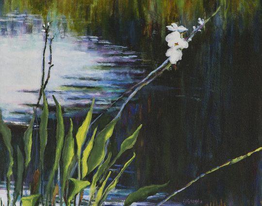 River Lily, Myakka, Acrylic
